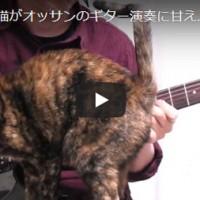 猫,CAT,ネコ,ねこ,いたずら,かわいい,ギター,練習,エレキギター,ブルース,ペンタトニック,スケール,アドリブ,Mischievous cat,KOTA MUSIC