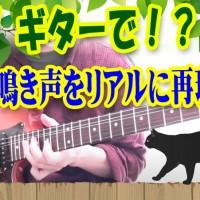 ギター,エレキ,エフェクター,ワウ,ネコ,子猫,鳴き声,再現,cat,guitar,kitten,かわいい,cute
